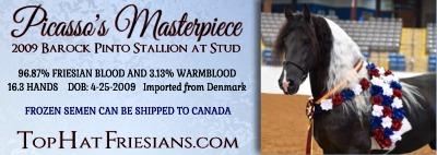 Canadian Friesian Horse Ad