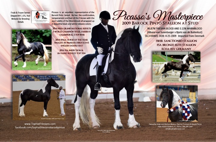 Picasso's Masterpiece Barock Pinto Stallion Full Spread