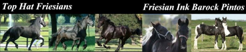 Visit website at TopHatFriesians.com